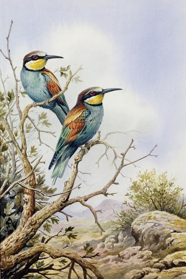 Bee-Eaters-Carl Donner-Giclee Print