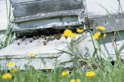 Bee Hive-David Aubrey-Photographic Print