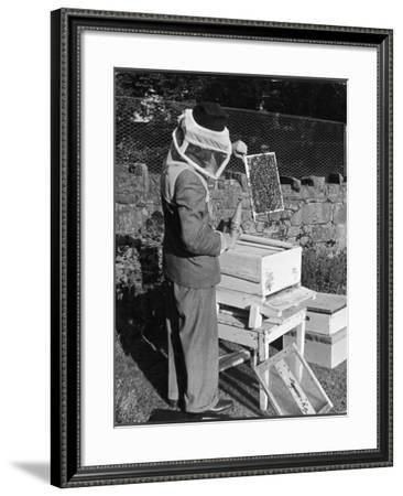 Bee Keeping - a Method of Holding a Brood Frame, When Looking for the Queen Bee--Framed Photographic Print
