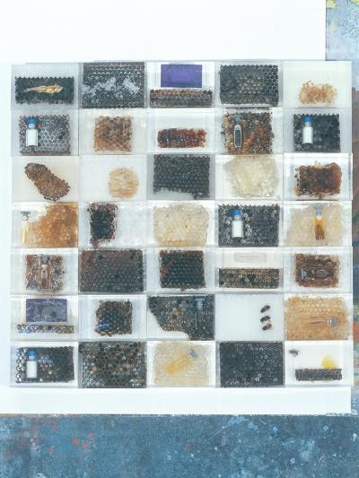 Bee Resin Casts-Charlie Millar-Giclee Print