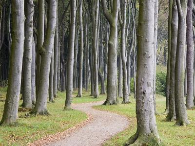 Beech Forest on the Baltic Coast-Frank Lukasseck-Photographic Print