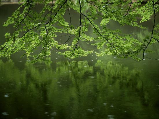 Beech Leaves Over Lake, Waggoners Wells, Grayshot, Surrey, England, United Kingdom-Pearl Bucknall-Photographic Print