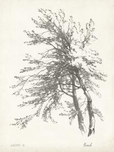 Beech Tree Study