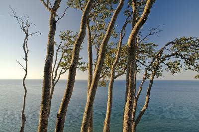 Beech Trees on Cliffs, Log Slide Overlooking Lake Superior, Pictured Rocks National Lakeshore-Judith Zimmerman-Photographic Print