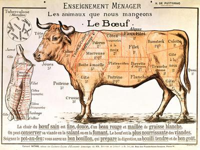 Beef: Diagram Depicting the Different Cuts of Meat--Giclee Print