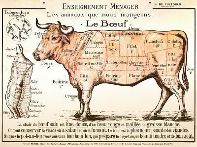 Beef Diagram--Art Print