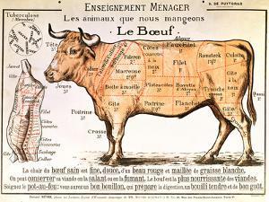 Beef Diagram