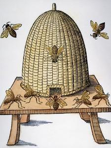 Beehive, 1658