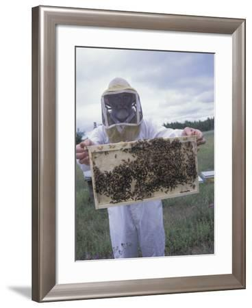 Beekeeper Holding Section of Beehive with Honeybees--Framed Photographic Print