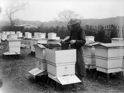 Beekeeping--Photographic Print