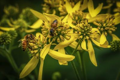 Bees on Flowers-Stephen Arens-Photographic Print