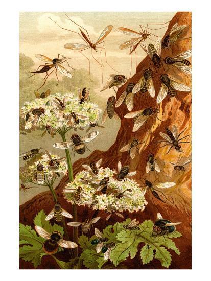 Bees-F^W^ Kuhnert-Art Print