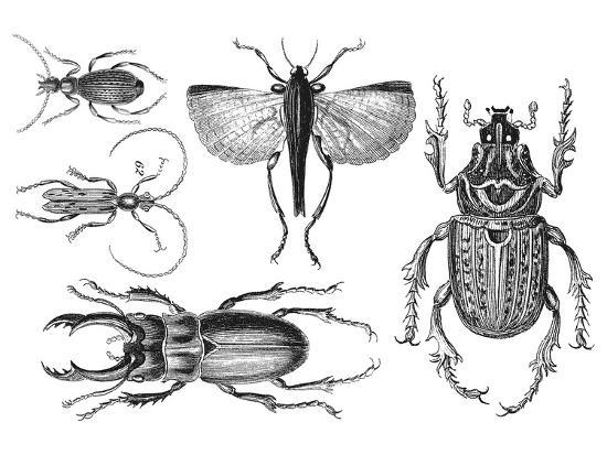 Beetle 2-Lebens Art-Art Print