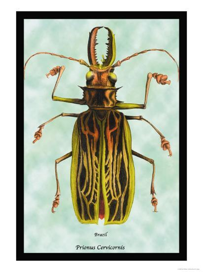Beetle: Brazilian Prionus Cervicornis-Sir William Jardine-Art Print