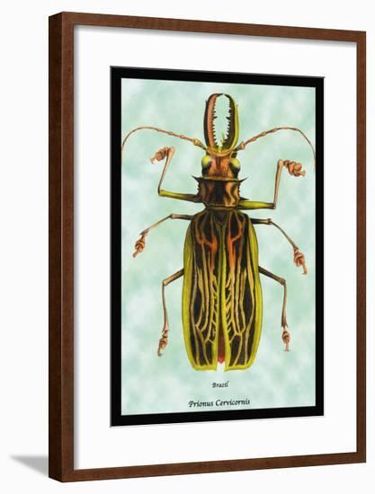 Beetle: Brazilian Prionus Cervicornis-Sir William Jardine-Framed Art Print
