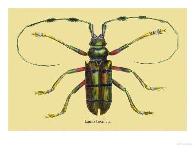 Beetle: Lamia Tricincta-Sir William Jardine-Art Print