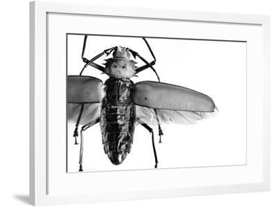 Beetle on Display, Santa Fe, New Mexico. Usa-Julien McRoberts-Framed Photographic Print