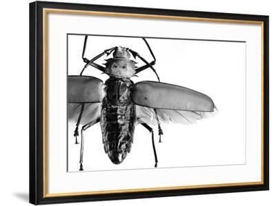Beetle on Display, Santa Fe, New Mexico. Usa-Julien McRoberts-Framed Photographic Print