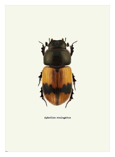 Beetle Orange-GraphINC-Art Print