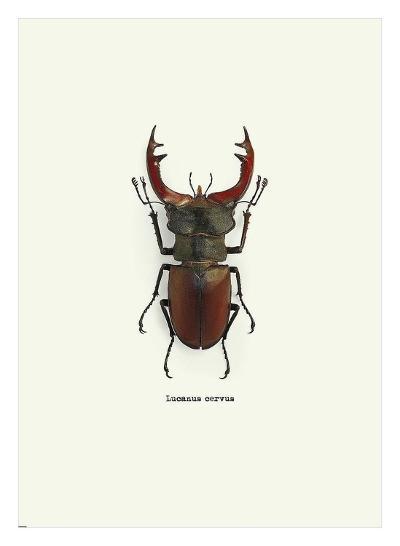 Beetle Red-GraphINC-Art Print