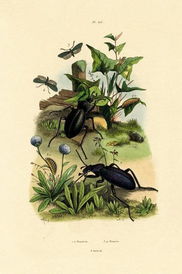 Beetles, 1833-39--Giclee Print