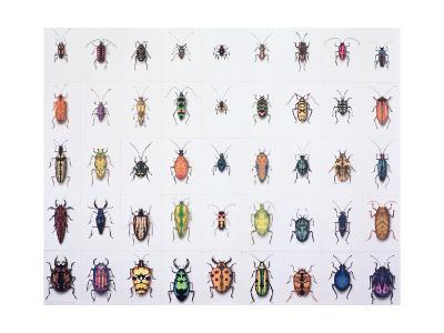 Beetles, 1999-Charlie Baird-Giclee Print