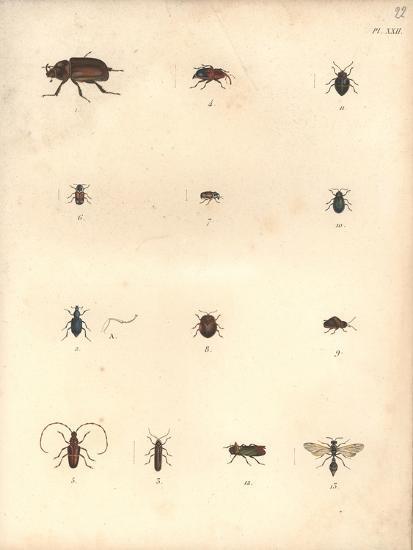 Beetles and Wasps-Baron Friedrich von Humboldt-Giclee Print