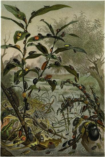 Beetles in a Flood--Giclee Print