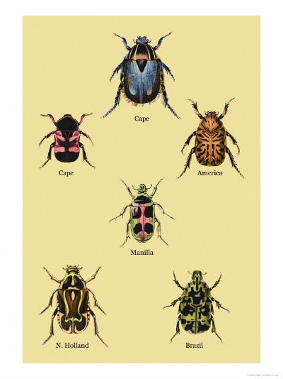 Beetles of Cape, America, Manilla, N. Holland and Brazil-Sir William Jardine-Art Print