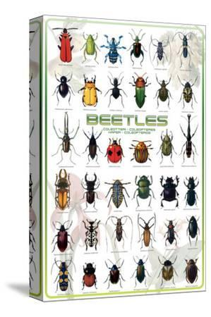 Beetles--Stretched Canvas Print