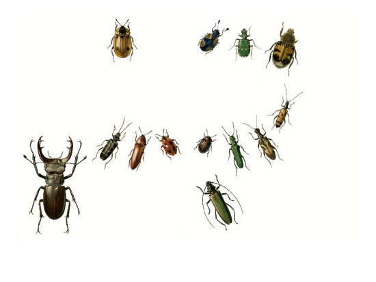 Beetles-English School-Giclee Print