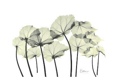 Begonia Leaves in Green-Albert Koetsier-Art Print