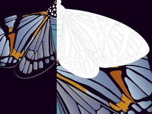 Metamorphosis of Iris by Belen Mena