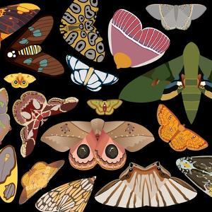Moths Pachanga, Moths Mix by Belen Mena
