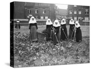 Belgian Nuns Gardening