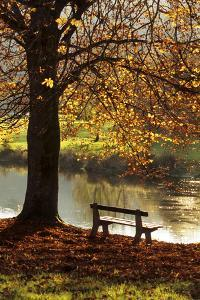 Belgium Bench in Park in Autumn by Beech Tree and Lake