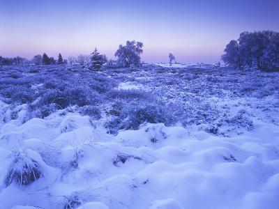 Belgium, High Fens, Hautes Fagnes, High Fens-Eifel Nature Park, Moor in Winter before Sunrise-Andreas Keil-Photographic Print
