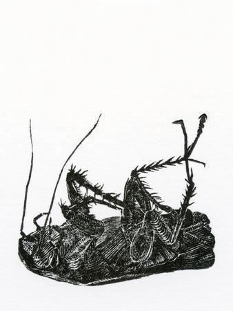 Dead Cockroach, 2014