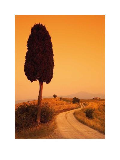 Bella Toscana-Tom Mackie-Art Print