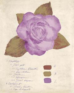 Botanical Wash I by Belle Poesia