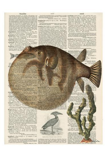 Belly Fish 2-Tina Carlson-Art Print