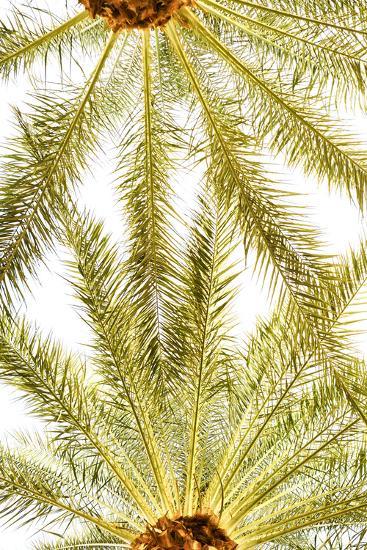 Below the Palms VI-Karyn Millet-Photo