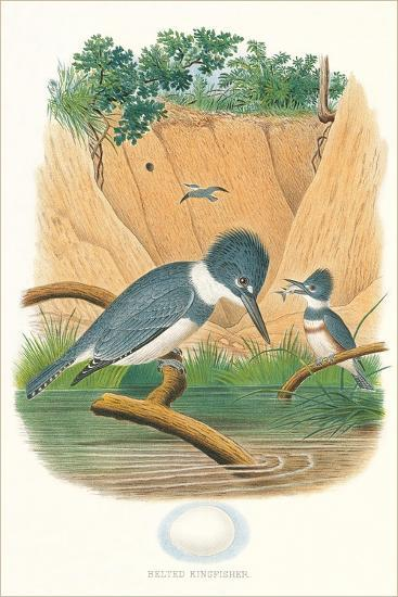 Belted Kingfisher and Egg--Art Print