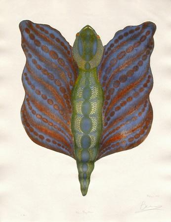 Mr Papillon III