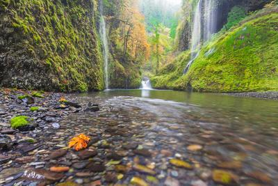 Water Pours from the Walls of Eagle Creek Canyon after a Recent Rainstorm, in Oregon