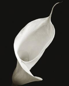 Calla I by Ben Davies