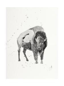 Watercolor Buffalo by Ben Gordon