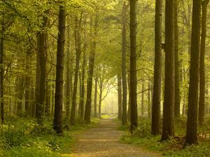 Path Leading Through Forest, the National Forest, Midlands, UK, Spring 2011 by Ben Hall