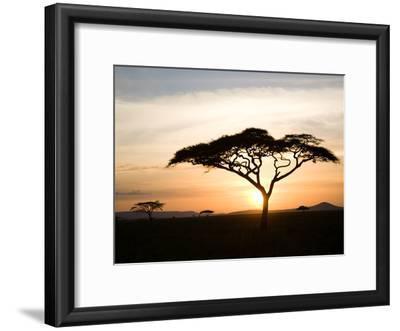 A Acacia Tree in the Serengetti