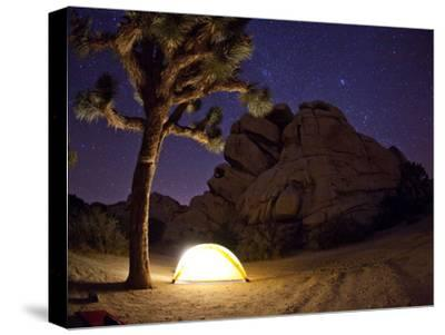 A Climber's Tent Lights Up a Joshua Tree in the Clear Desert Night